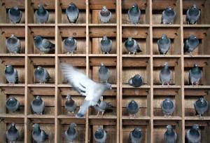 Pigeon holes